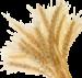 Barley Rise Logo